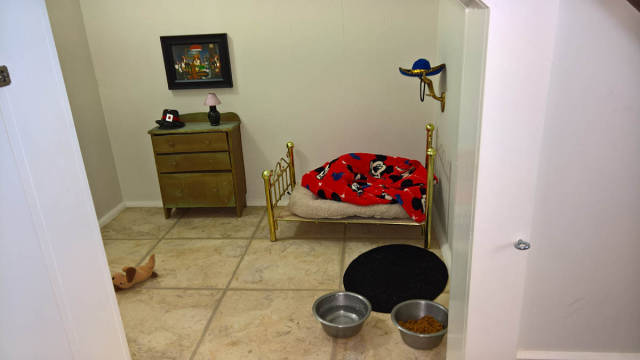 Woman Built A Cute Tiny Bedroom For Her Tiny Dog (4 pics)